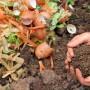 Compost Production Workshop